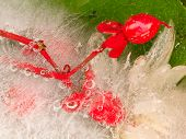 stock photo of fragile  - Frozen fragile abstraction of ice and beautiful red berries Hoperikum on a green background and bubbles - JPG