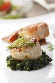 stock photo of scallops  - closeup of a grilled scallop on spinach  - JPG