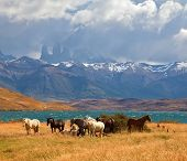 image of andes  - Chilean Andes - JPG
