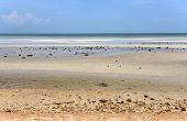 foto of tide  - Low tide on the sea in Thailand on Koh Samui - JPG