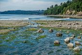 picture of tide  - A wide freshwater stream flows into the Puget Sound at Saltwater State Park in Washington State. The tide is low and a serene mood is set by calm waters. ** Note: Visible grain at 100%, best at smaller sizes - JPG
