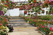 stock photo of greenhouse  - Greenhouse - JPG