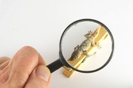 foto of hemidactylus  - One Small Gecko Lizard and Loupe on a White Background - JPG