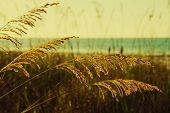 ������, ������: ����� Golden Sea ����