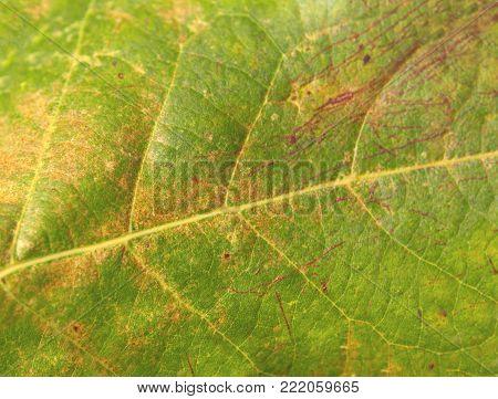 poster of Green macro autumn botany leaf shoot closeup pattern texture