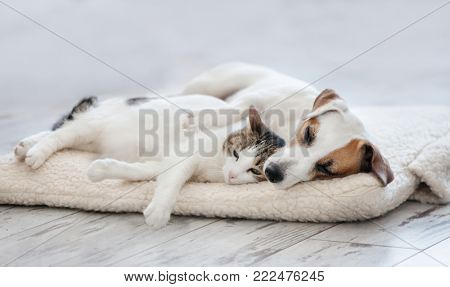 poster of Cat and dog sleeping. Pets sleeping embracing