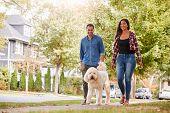 Couple Walking Dog Along Suburban Street poster