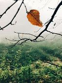 Autumn Leaf On Tree Branch With Cobweb And Drops Of Dew  In Foggy  Autumn Woods In Cold Morning. Mis poster