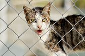 Close Up View Cute Black Brown Stripped Cat With White Muzzle Open Mouth Looking Out The Cage Standi poster