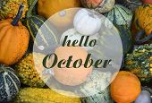 Hello October Greeting Card With Colorful Pumpkins.autumn Harvest,halloween Or Thanksgiving Concept. poster