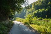 Cycling Through Forest On A Sunny Day. Road In Forest Nature. Lonely Forest Road. Nature. Road. Natu poster