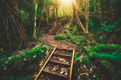 Beautiful Rainforest Jungle In Tasmania, Australia poster