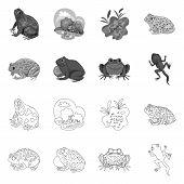 Vector Illustration Of Wildlife And Bog Symbol. Set Of Wildlife And Reptile Stock Symbol For Web. poster