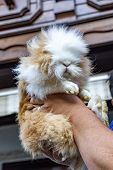 Cute Hairy Cat Holding In The Hand poster