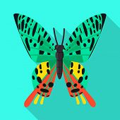 Isolated Object Of Butterfly And Zoology Symbol. Set Of Butterfly And Wildlife Stock Symbol For Web. poster
