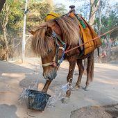 Buddhist Horse Overturns Bucket Of Water. Beautiful Horse In Buddhist Ammunition. Version 2. poster