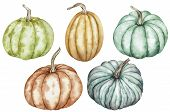 Watercolor Clipart Of Colorful Pumpkins - Green, Red, Orange, Blue. Thanksgiving Collection Of Pumpk poster