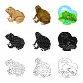 Vector Design Of Wildlife And Bog Symbol. Collection Of Wildlife And Reptile Stock Vector Illustrati poster
