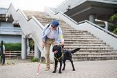 Senior Blind Man With Guide Dog Standing By The Stairs In City. poster