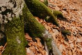 Moss On The Roots Of A Tree In The Forest In Autumn poster