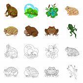 Vector Design Of Wildlife And Bog Symbol. Set Of Wildlife And Reptile Vector Icon For Stock. poster