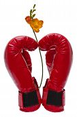 pic of boxing day  - boxing gloves folded in the shape of a heart and flower - JPG