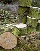 image of machete  - outdoor woodworking scenery with sliced stem and machete in forest ambiance - JPG