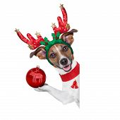 stock photo of christmas dog  - reindeer dog behind a blank banner with a christmas ball - JPG