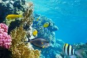Coral garden with colorful fishes