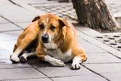 stock photo of seeing eye dog  - A dog on the street somewhere in Bangkok Thailand - JPG