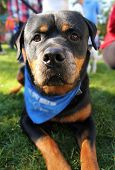 image of spayed  - a cute dog at a local park - JPG