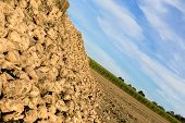 stock photo of sugar industry  - A Lot Of Fresh Harvested Sugar Beets  - JPG