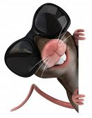 pic of gerbil  - Mouse - JPG