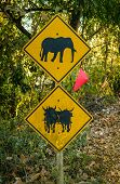 image of oxen  - Elephant and Ox warning signs on the road, Thailand.