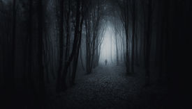pic of surrealism  - Man silhouette on path in a dark creepy surreal forest with fog at night - JPG