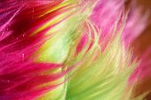stock photo of nylons  - Colorful neon nylon fibers or faux fur background - JPG