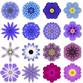 foto of blue rose  - Big Collection of Various Blue Concentric Pattern Flowers - JPG