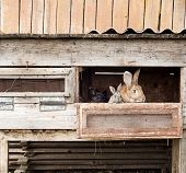 picture of rabbit hutch  - Mother rabbit with newborn bunnies  in cage - JPG