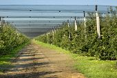 stock photo of hail  - Modern apple plantation with net against hail and birds - JPG