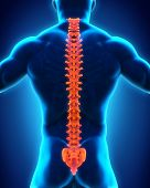 stock photo of lumbar spine  - Human Male Spine Anatomy Illustration - JPG