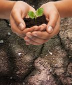 stock photo of environmental conservation  - fertility - JPG
