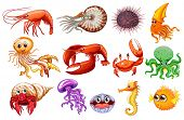 picture of aquatic animal  - Illustration of different kind of sea animals - JPG