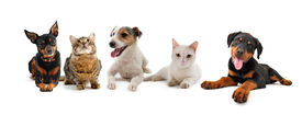 image of cat dog  - group of puppies and cats on a white background - JPG