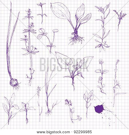 Постер, плакат: Set of pencil drawing herbs and leaves, холст на подрамнике