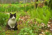 stock photo of kitty  - Black white kitty sitting and hiding in the grass