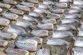 stock photo of threshing  - Drying snakeskin gourami fishes  - JPG