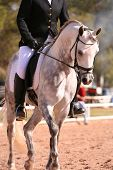 pic of dapple-grey  - grey arabian dressage show horse competing in dressage - JPG