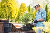 stock photo of plant pot  - Man planting pot at garden - JPG