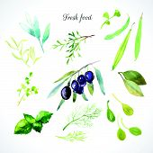 picture of bay leaf  - Watercolor illustration of a painting technique - JPG