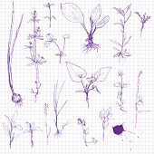 Постер, плакат: Set of pencil drawing herbs and leaves
